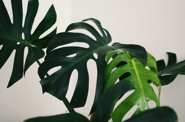 which plants to choose for your bathroom